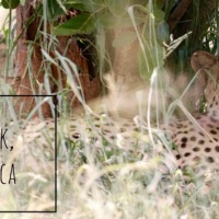 My 10 best tips for Safari at Kruger National Park, South Africa